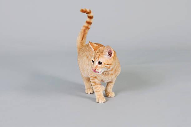 Active kittens playing picture id184392609?b=1&k=6&m=184392609&s=612x612&w=0&h=vstrghd wdeh7lj2jkkrfgbckzr4jr1rzwmerrlurvm=
