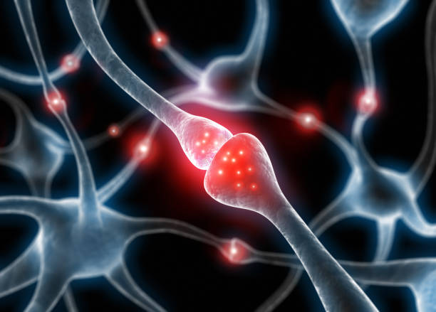 Active nerve cell synapses - 3D illustration nerve cells synapses with neurotransmitters - 3D illustration neurotransmitter stock pictures, royalty-free photos & images
