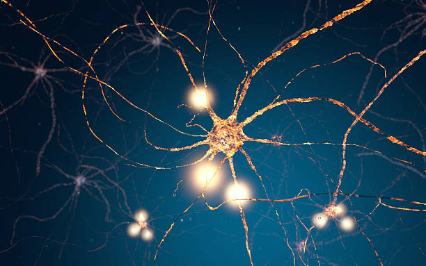 active neuron cells, synapse network - nerve cell stock photos and pictures