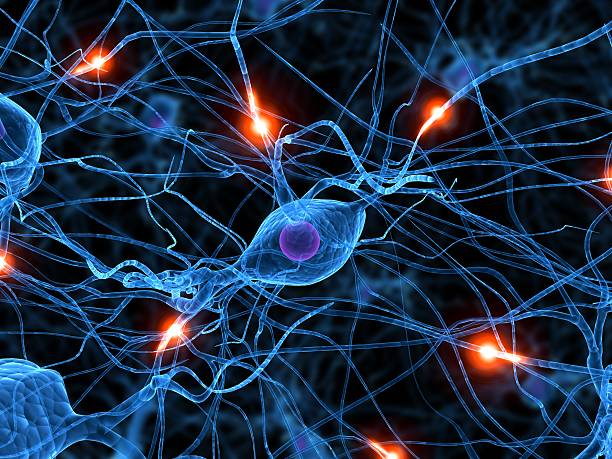 active neurone - nerve cell stock photos and pictures
