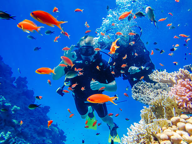active rest. diving at the coral reefs - underwater diving stock photos and pictures
