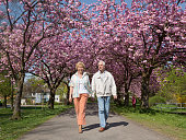Active senior couple walking under blooming cherry trees