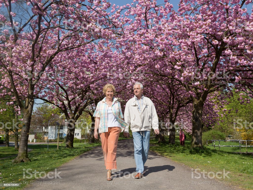 Aktive Senioren Paar zu Fuß unter blühenden Kirschbäumen – Foto