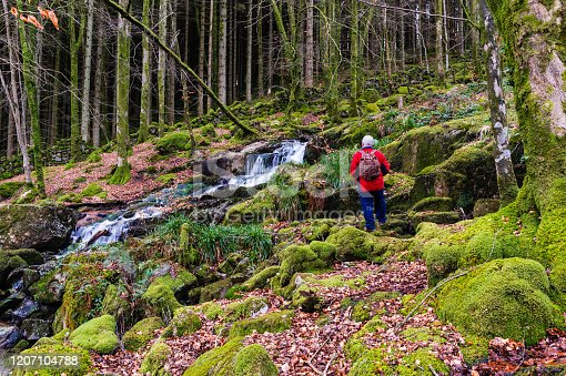 Active senior man dressed for a cold day wearing a rucksack in an area of woodland in Dumfries and Galloway, south west Scotland. The man is next to a waterfall. Trees and rocks are covered in moss and the ground is covered with wilted leaves and beechnuts.