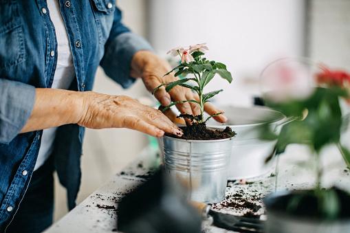 Active senior woman enjoying planting