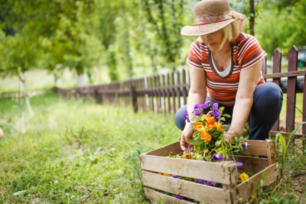 aktive senior frau gartenbau - gartenarbeit stock-fotos und bilder