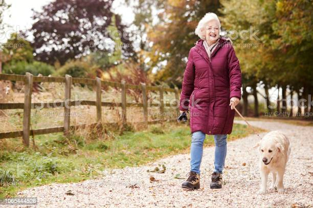 Active senior woman on autumn walk with dog on path through picture id1065444526?b=1&k=6&m=1065444526&s=612x612&h=esyi8bcr0wlv8p9n0s3g5khlkx7rxac4yjdvy1nelui=