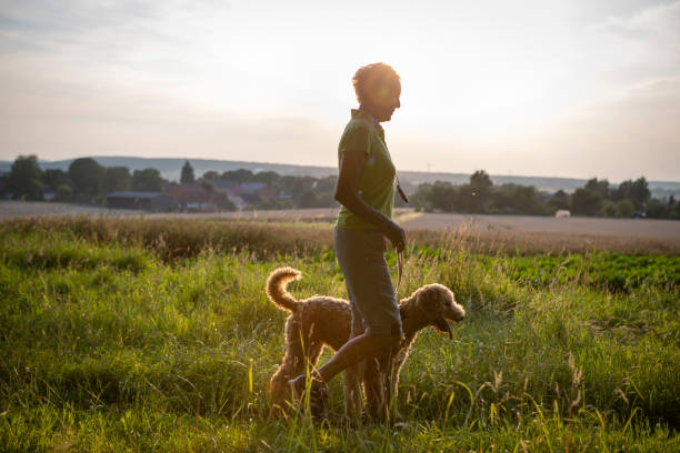 active senior woman walk with her dog in rural scene stock photo