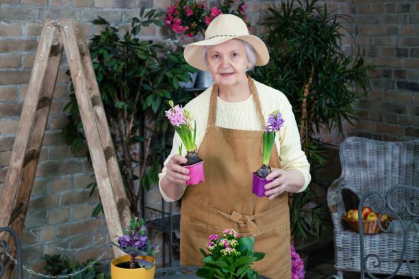 Active senior women potting spring flowers stock photo