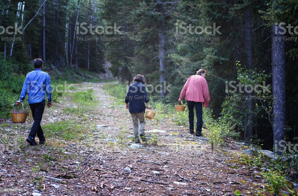 Active Seniors Mushroom Hunting in Wilderness with Baskets stock photo