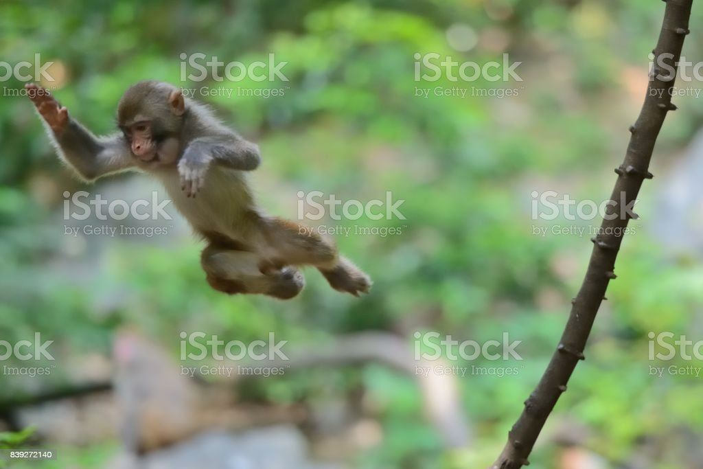 Aktive wilde Affen im Wald – Foto