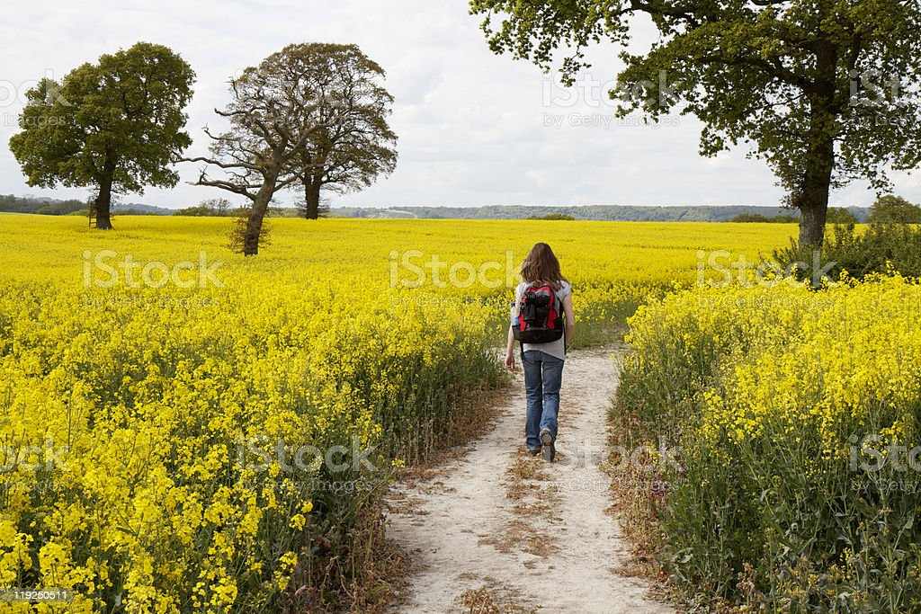Active woman walking through a yellow rapeseed field stock photo