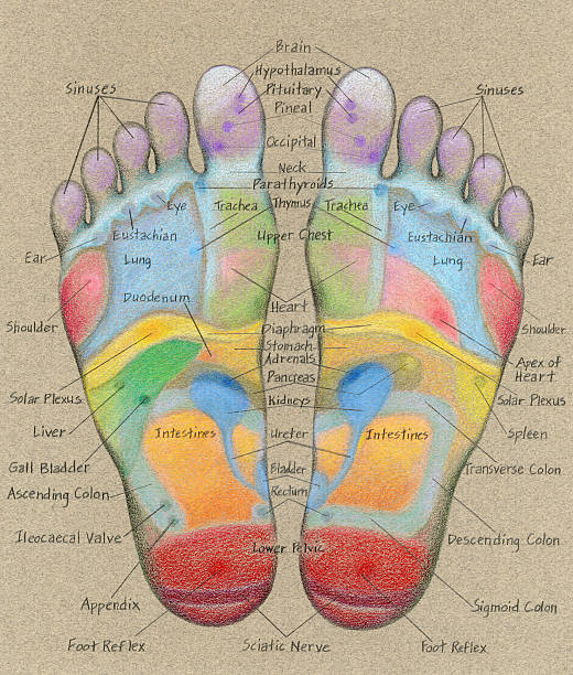 Acupressure Foot Massage Chart With Labels Stock Photo More