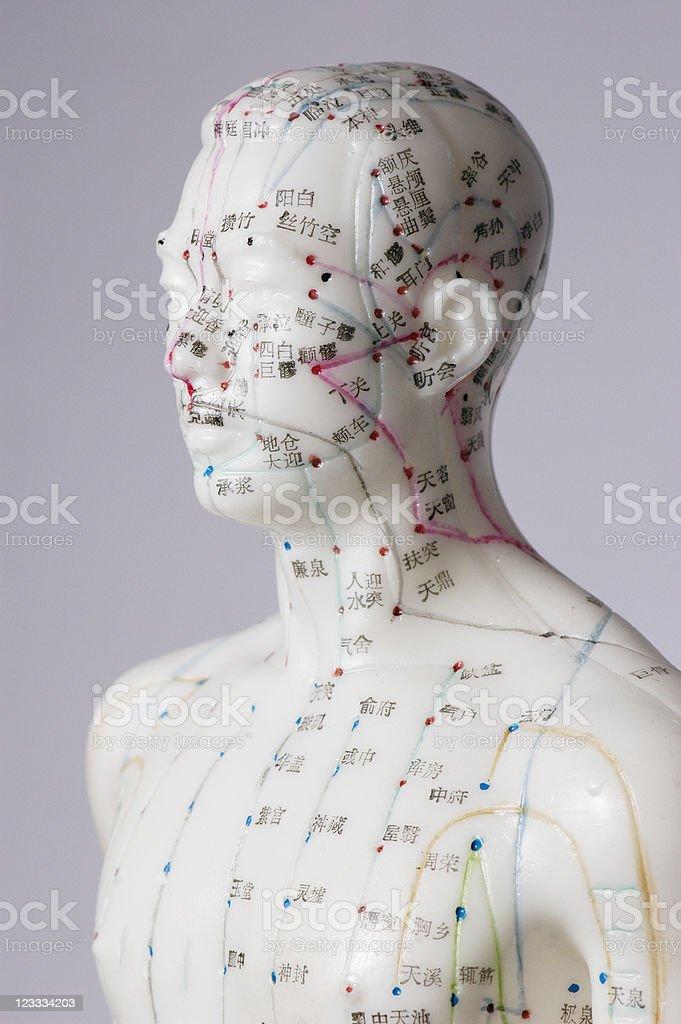 Acupuncture dummy stok fotoğrafı