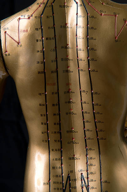 Best Acupuncture Meridians Stock Photos, Pictures & Royalty
