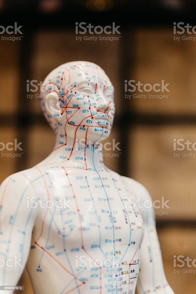 Acupuncture model featuring map of meridian points stock photo