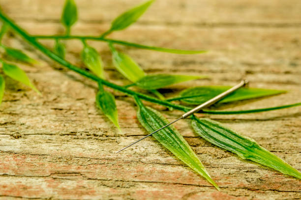 acupuncture needle with bamboo branch stock photo