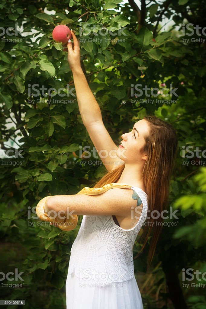 Adam and Eve concept: Eve holding Snake, reaching for apple. stock photo