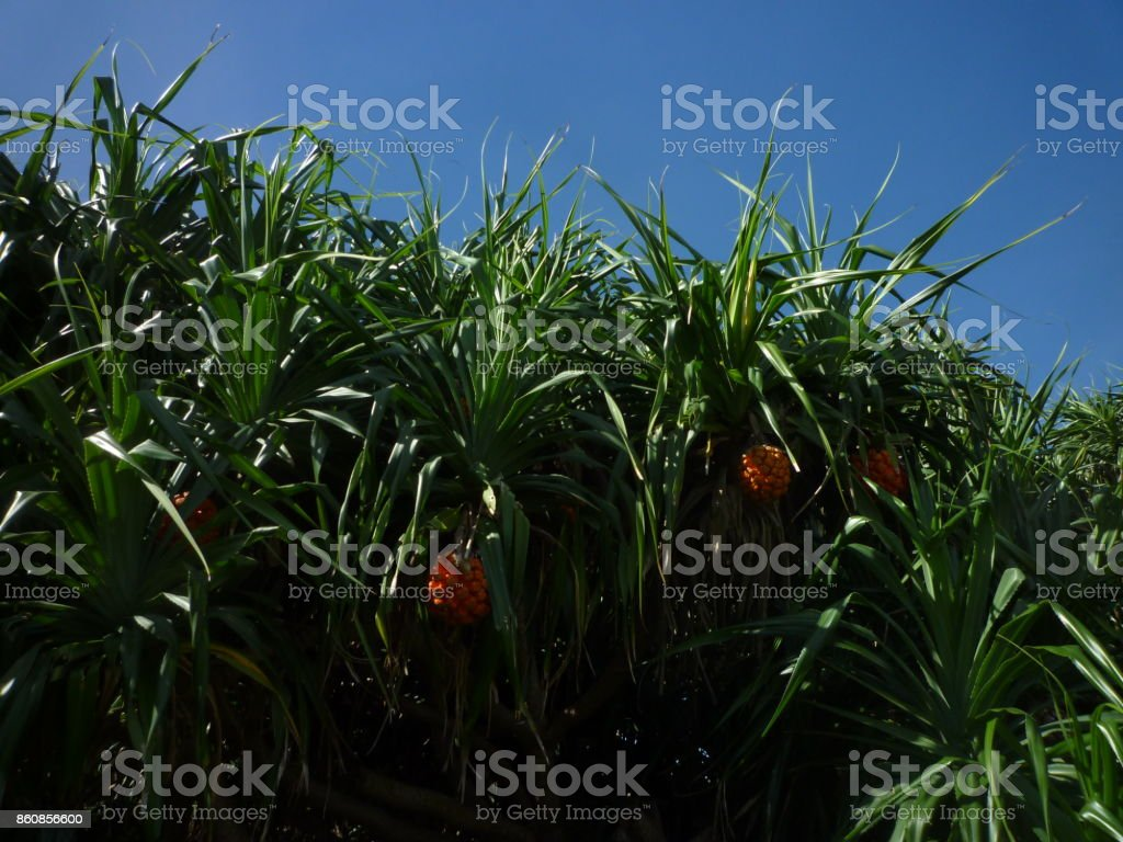 Adan's forest stock photo