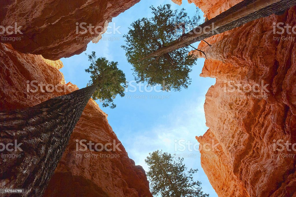 Adaptability of growing trees in Bryce Canyon NP, Utah, USA royalty-free stock photo