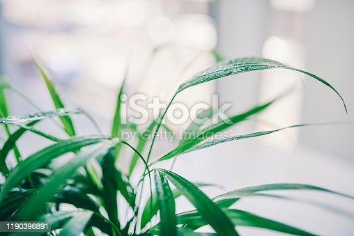 Cropped shot of a plant in an office