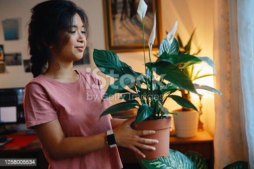 Young Asian woman is organising the plants in her apartment, taking care of the home garden.