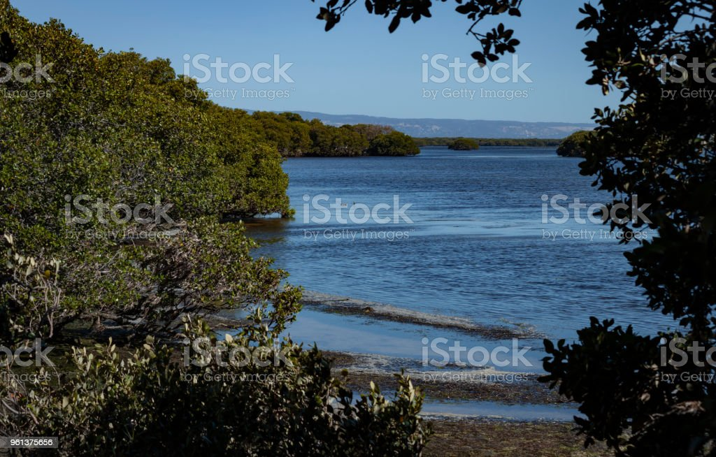 Adelaide from the St. Kilda mangroves stock photo