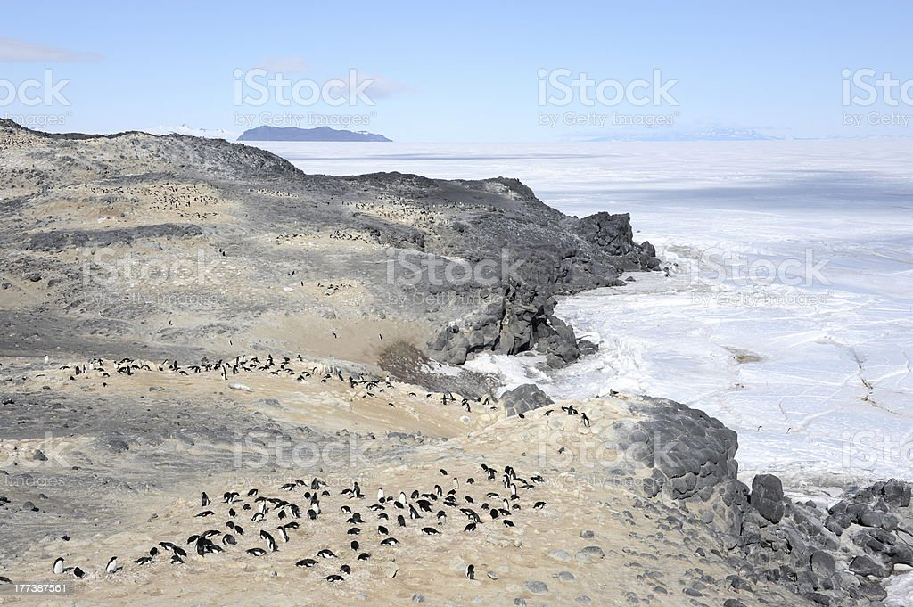 Adelie penguin colony stock photo