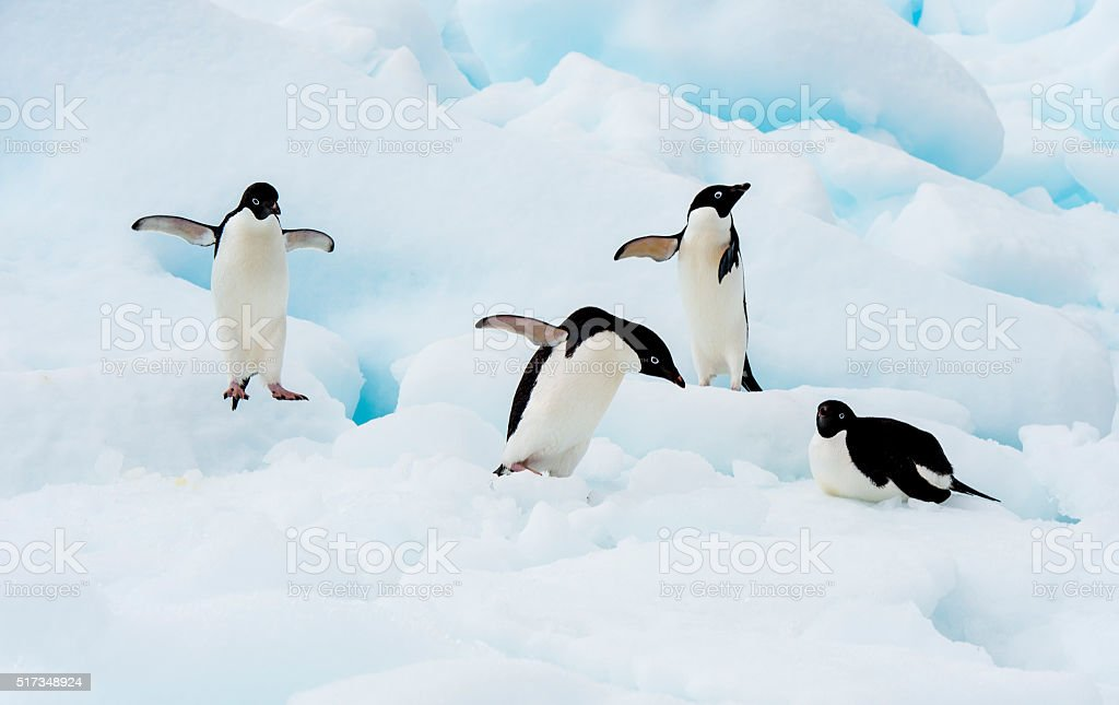Adelie Penguin on an Iceberg stock photo