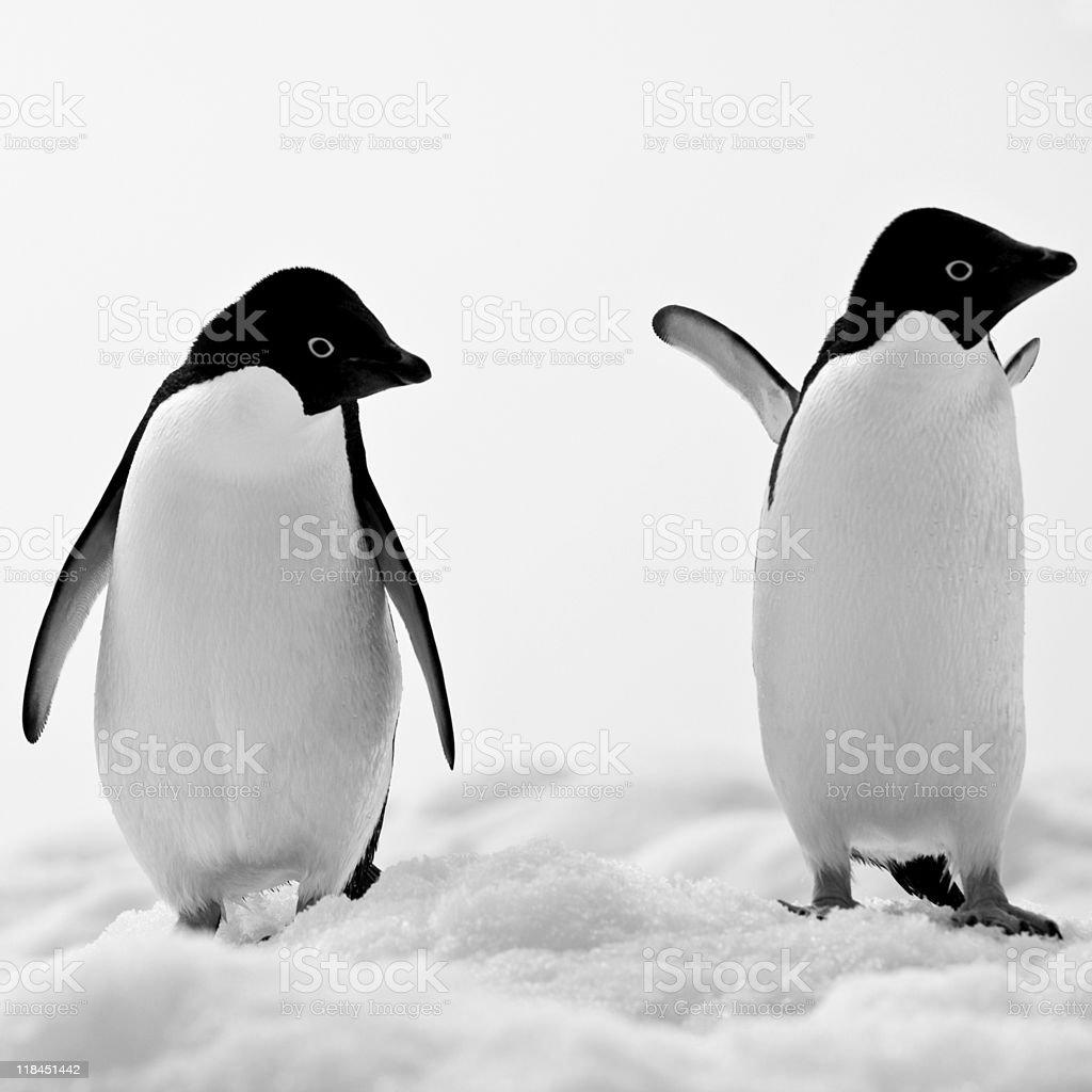 Adelie Penguins on Iceberg Paulet Island Antarctica stock photo