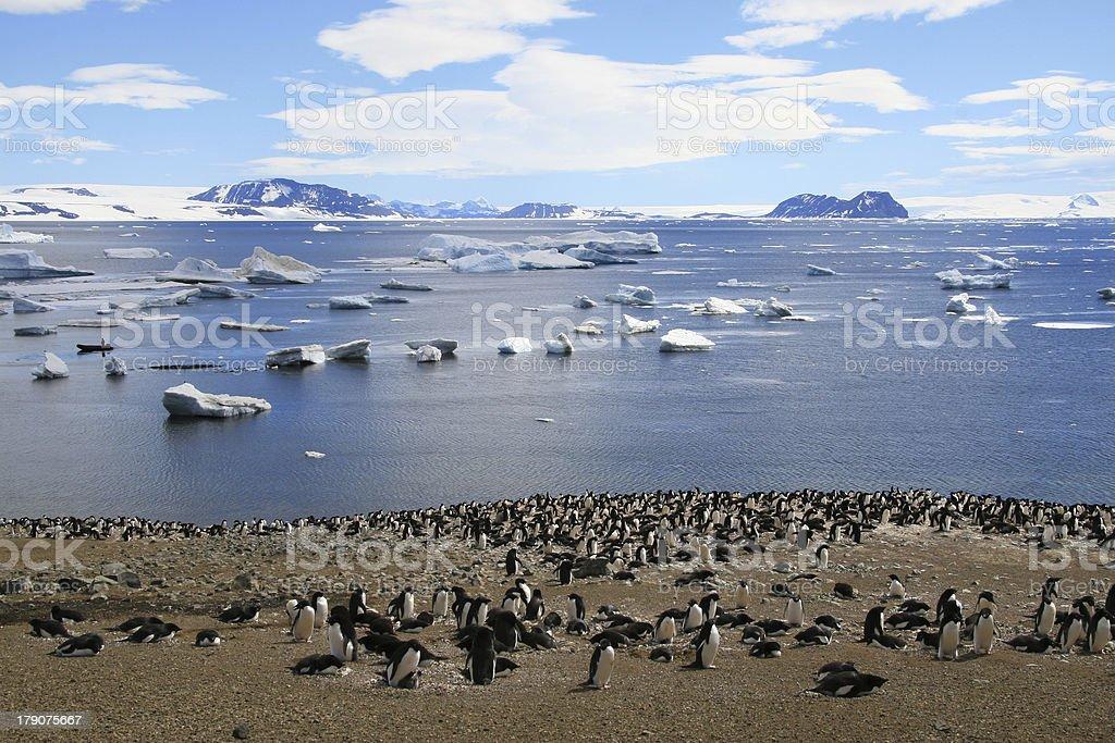 Adelie Penguins stock photo