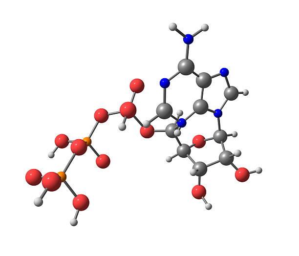 Adenozyno - 5'-trifosforan (ATP) Cząsteczka na białym tle – zdjęcie