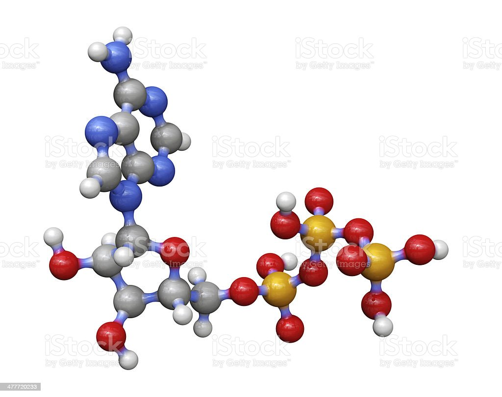 Adenosine Triphosphate stock photo