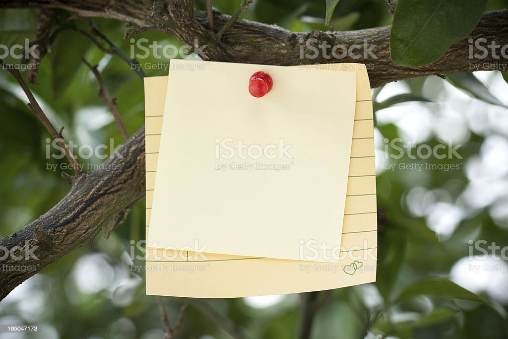 Adhesive Note on branch royalty-free stock photo