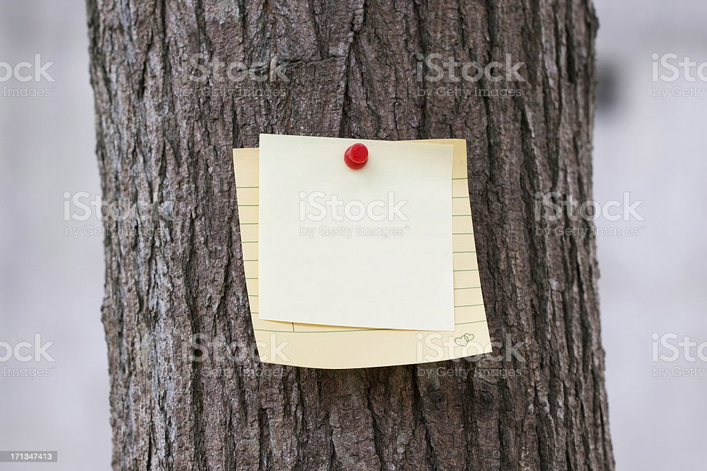 Adhesive Note on Tree royalty-free stock photo