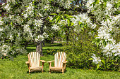 Adirondack chairs under blossoming trees at springtime