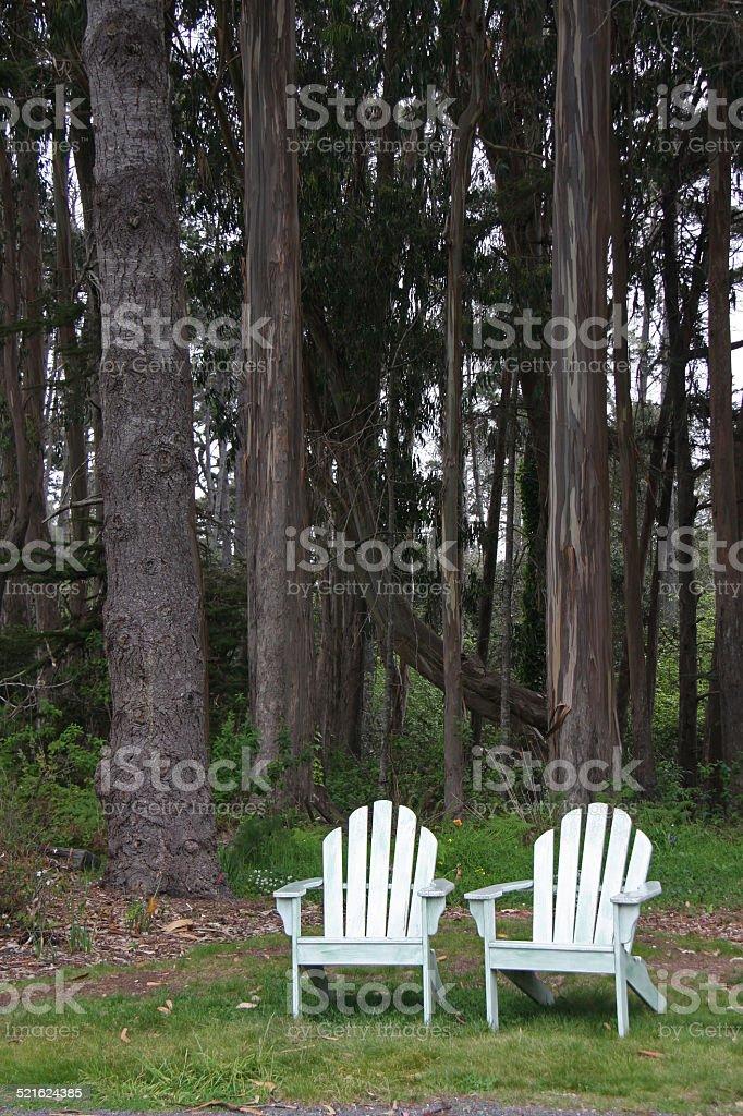 Adirondack Chairs Under Eucalyptus Trees stock photo