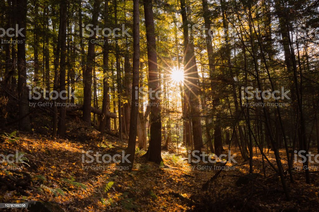 Adirondack Mountains, New York, Sunstar Through Tree, Forest in Fall - Royalty-free Adirondack Mountains Stock Photo