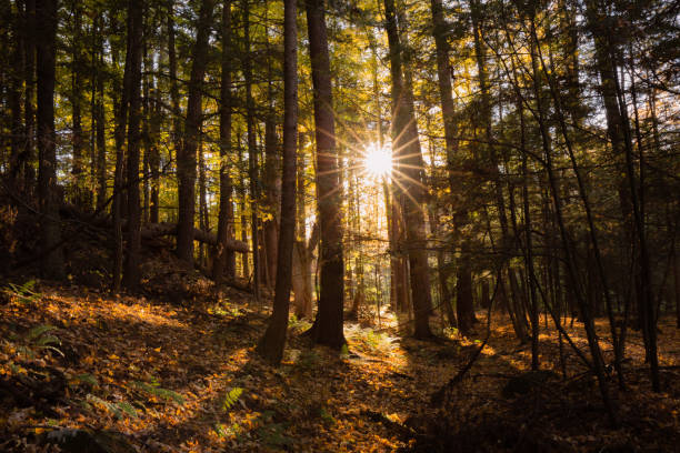 Adirondack Mountains, New York, Sunstar Through Tree, Forest in Fall stock photo