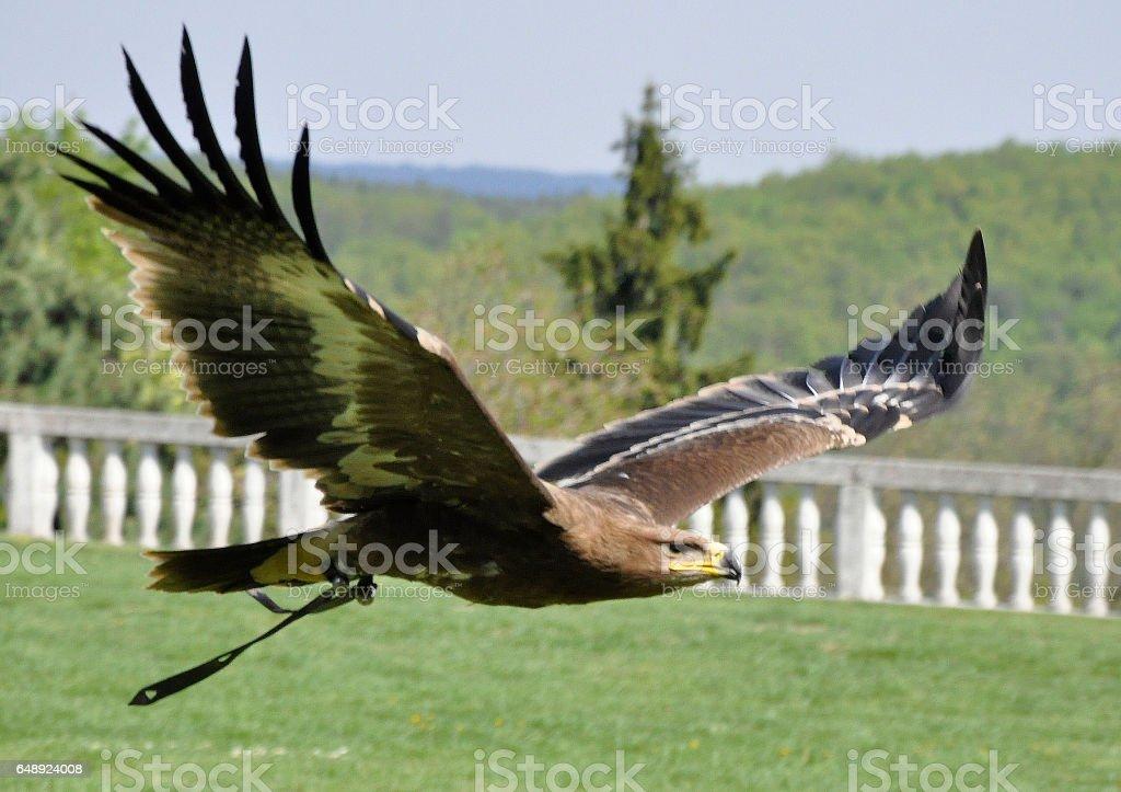 Adler stock photo