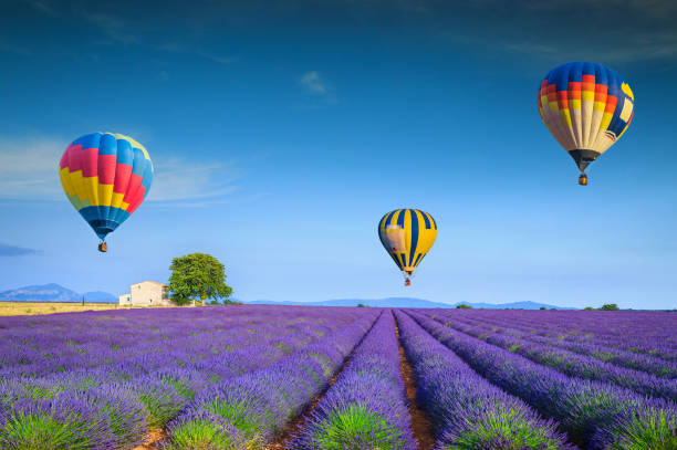 Admirable violet lavender fields and colorful hot air balloons, France Amazing flowery summer landscape. Flying colorful hot air balloons over the purple fragrant lavender fields, Valensole, Provence, France, Europe. Travel and recreation concept provence alpes cote d'azur stock pictures, royalty-free photos & images
