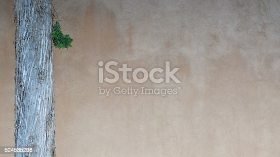 A pine branch dangles from a tree in front of an adobe wall.
