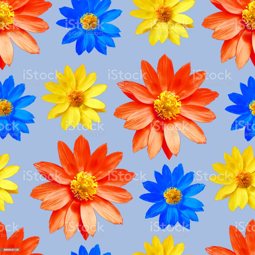 Adonis. Seamless pattern texture of flowers. Floral background, photo collage royalty-free stock photo