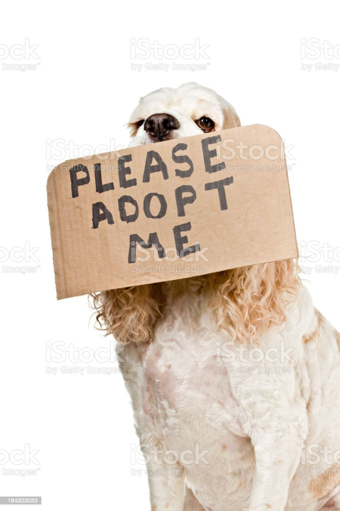Adopt A dog royalty-free stock photo