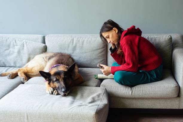 Adopted dog and its human spending time together stock photo
