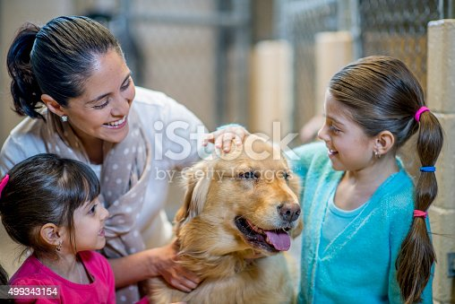 istock Adopting a Family Pet From the Pound 499343154
