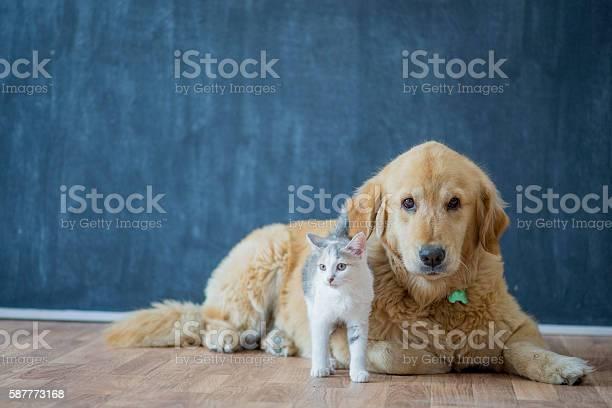 Adopting pets picture id587773168?b=1&k=6&m=587773168&s=612x612&h=mkte3noppx5szhu34i1iebyf xsj xlylzdun58md s=