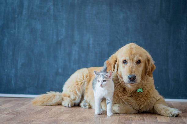 Adopting pets picture id587773168?b=1&k=6&m=587773168&s=612x612&w=0&h=yhi0bzci4m ozodryw 4ibaaai8gihchzojrlivnwkq=