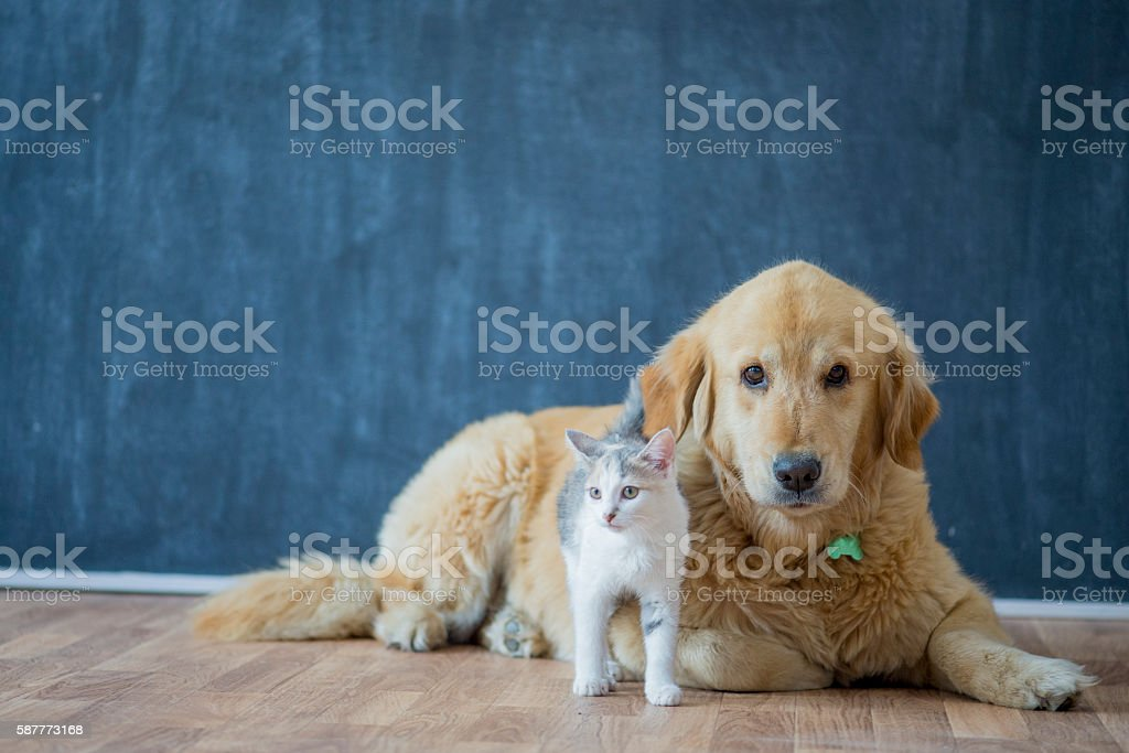 Adopting Pets stock photo
