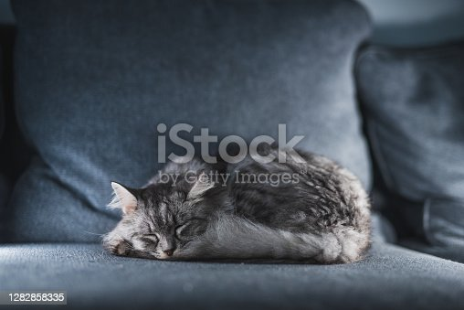 istock Adorable And Cute Gray Tabby Kitten Sleeping On Couch 1282858335